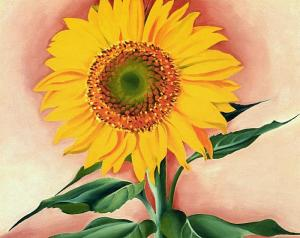 a-sunflower-from-maggie